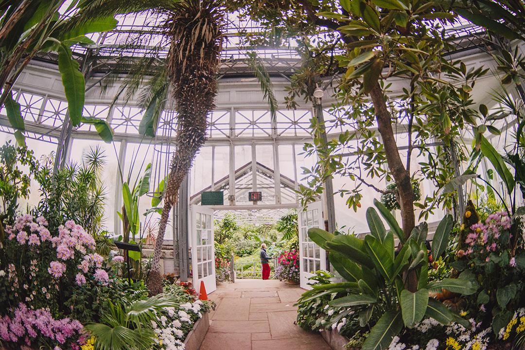The Palm House at Allan Gardens Conservatory. RUSABA ALAM/THE VARSITY